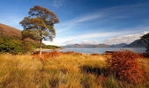 Auyumn in Lochaber. — Stock Photo
