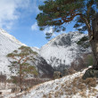 Winter in Glen Nevis. — Stock Photo