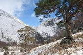 Winter in Glen Nevis. — Stock Photo