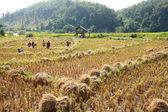 Farmer in filed — Stock Photo
