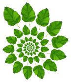 Birch Leaf Pattern — Stock Photo