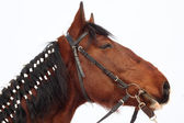 Horse with braided mane — Stock Photo