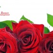 Three red roses with dew drops — Stock Photo