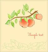 Apple Branch Postcard — Stock Vector