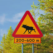 Moose Warning Traffic Sign — Stok fotoğraf