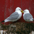 Stock Photo: Romantic Gull Couple