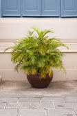 Potted shrubs. — Stock Photo