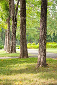 Trees on the lawn. — Stock Photo