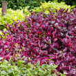 Stock Photo: Colorful shrubs.