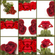 Red rose collage of nine photos — Stock Photo