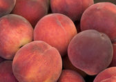 Nectarines Bin — Stock Photo