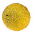 Foto Stock: Sweet fresh yellow melon
