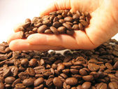 Coffee beans in the hand — Stock Photo