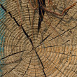 Stock Photo: Tree rings