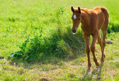 Horse on pasture — Stock Photo