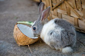 Rabbit — Stock Photo