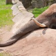 Elefant im Zoo — Stock Photo #4119620