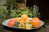 Decorative Halloween pumpkins on the plate — Stock Photo