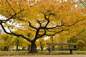 Beautiful yellow tree and a bench in autumn park in Copenhagen — Stock Photo