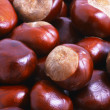 Horse chestnut - Stock Photo