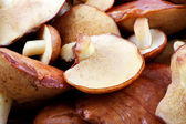 Mushrooms — Foto de Stock