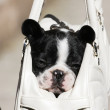 French bulldog-baby — Stock Photo #4192437