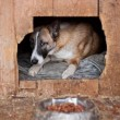 Dog in kennel — Stock Photo
