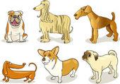 Purebred dogs — Stock Vector