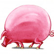 Fat big pig — Stock Photo