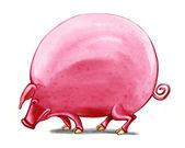 şişko domuz — Stok fotoğraf
