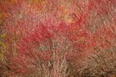 Herbstfarben — Stockfoto