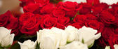 Red and white roses — Stock Photo