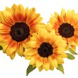 Bunch of sunflower — Stock Photo