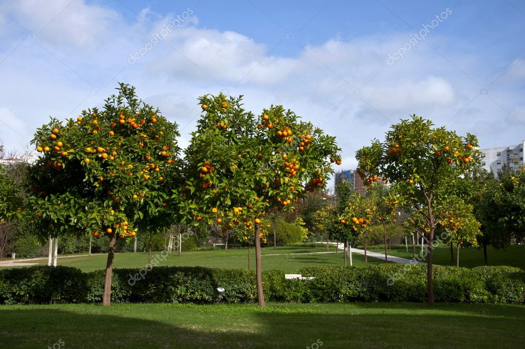 Portugal orange garden courtyard Lisbon — Stock Photo #4591680