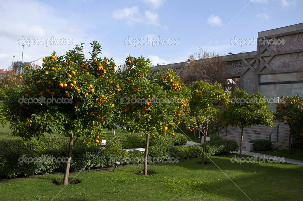 Portugal orange garden courtyard Lisbon — Stock Photo #4591683