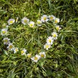 Camomile heart shape on the grass — Stock Photo