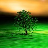 Solitary tree on the green field — Stock Photo