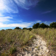 Stock Photo: Beach path in Maine