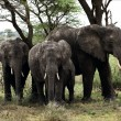Elephants under a tree. - Stock Photo