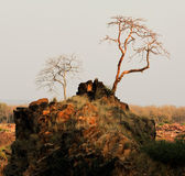 Bandhavgarh. — Foto de Stock