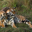 Stock Photo: Tigress and cub.
