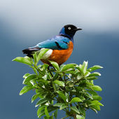 Bird on a branch. — Stock Photo