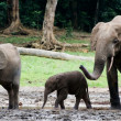 Family of forest Elephants. — Stock Photo #4082221