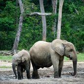 çocuk ile anne fil buzağı. — Stok fotoğraf