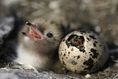 Just hatching baby bird. — Stock Photo