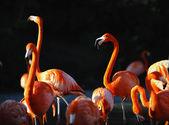 Flamingo üzerinde bir düşüş. — Stok fotoğraf