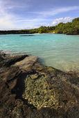 Tropické pobřeží. — Stock fotografie