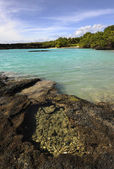Tropical coast. — Stockfoto