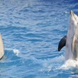 Bottlenose dolphins. — Stock Photo