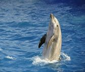 Bottlenose dolphin. — Stock Photo
